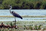 Delta Dunării este vulnerabilă la efectele schimbărilor climatice