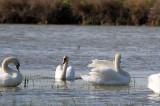 S-a deschis oficial sezonul turistic în Delta Dunării