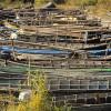 Emiterea actelor de reglementare în vederea desfășurării activității de pescuit comercial în perimetrul RBDD pentru anul 2018