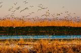 România a realizat prima raportare națională pe Directiva Păsări