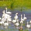 Manualul digital al turistului în Rezervația Biosferei Delta Dunării