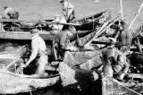Ordinul privind pescuitul comercial în habitatele piscicole naturale, cu excepţia ariilor naturale protejate