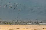 ARBDD: Plajele de la Corbu și de la Vadu – protejate prin lege