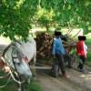 Acte de constatare  întocmite de jandarmii tulceni pentru tăiere ilegală şi furt de material lemnos