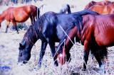 """Primar Mahmudia: """"Am notificat proprietarii care au intrat abuziv în incinta Mahmudia și și-au lăsat caii să moară de foame. Facem tot ceea ce putem să rezolvăm această problemă"""""""