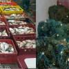 O  jumătate de tonă de peşte și plase monofilament, confiscate de poliţiştii de frontieră tulceni