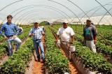300 locuri de muncă în domeniul agricol în Portugalia prin intermediul Reţelei EURES