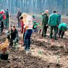 Romsilva derulează o amplă campanie de împădurire. Sunt plantați 4,1 milioane de puieți forestieri
