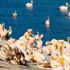 DANUBEparks: Exemple de bună practică pentru  evitarea mortalității la păsări prin electocutare