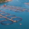 Fonduri de 20,7 milioane de euro pentru investiții în acvacultură și prelucrarea produselor pescărești
