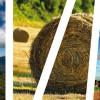 Recomandări AFIR privind implementarea cu succes a proiectelor de investiții  finanțate prin PNDR 2020