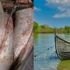 Scrumbia provoacă tărăboi: dezbateri aprinse între Asociațiile de pescari din Delta Dunării. Reguli propuse.
