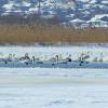 ARBDD: A fost adusă hrană pentru păsările din zona Zagăn pentru a preveni apariția unor mortalități datorate înghețului
