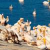 Reuniune importantă pentru turismul din Delta Dunării, inițiată de Ministrul Turismului