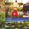 DELTA DUNĂRII – peisaje și păsări (film)