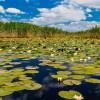 Lege pentru Delta Dunării: reducerea cu 50% a unor taxe pentru cei care locuiesc sau lucrează în deltă