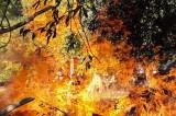 Incendiu pe canalul 36 din Delta Dunării
