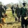 Fermierii vor fi despăgubiți prin modificările Legii vânătorii. Fonduri mai mari pentru mediu și proprietate