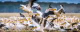 """""""Danube Free Sky"""": Conferință internațională privind protecția păsărilor migratoare, la Tulcea"""