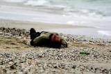 Șocant: Tulcean găsit mort pe plaja de la Corbu, Constanța