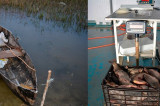 Prins la pescuit în perioada de prohibiţie cu plase monofilament