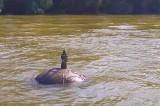O mină din primul război mondial a oprit circulația pe canalul Sulina…