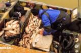 Poliția Română: acțiuni pentru prevenirea și combaterea braconajului piscicol