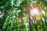 24.000 de hectare de păduri virgine din România au intrat în patrimoniul UNESCO