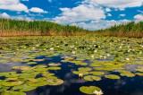 AMDT Delta Dunării: Numărul de turiști aproape s-a dublat, în 2018, față de anul trecut