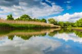 Acordarea de despăgubiri pentru proprietarii suinelor afectate de gripa porcină africană din Delta Dunării