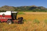 Politica Agricolă Comună – Prezent şi viitor. APIA și plățile directe pentru fermieri după 2020.