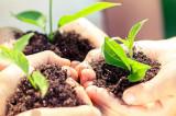 Legea compostului, o lege necesară pentru diminuarea încălzirii globale și menținerea fertilității solurilor