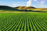 Reglementarea vânzării-cumpărării terenurilor agricole din extravilanul localităților, în dezbatere la Comisia pentru Agricultură