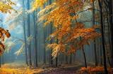 """Colaborare pentru Educaţie Ecologică """"Împreună pentru natură"""":acțiune de plantare a puieților la Niculițel pentru regenerarea pădurii"""