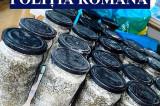 Au fost confiscate zece kg de icre negre, trei kg de morun, două motoare de barcă, 2500 de metri de plasă monofilament