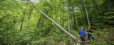 WWF propune soluțiile care ar scăpa România de infringementul pe păduri. Măsuri-cheie pentru combaterea integrată a tăierilor ilegale