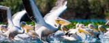 """WWF România își propune pentru 2020 un proiect ambițios: """"Zero plastic în Delta Dunării"""""""