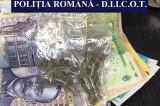 Arest preventiv pentru trei tineri din Tulcea suspectați de trafic de droguri (cannabis)