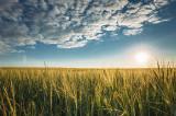 Se fac toate demersurile pentru ca activitatea de producţie din agricultură să se desfăşoare în cele mai bune condiţii