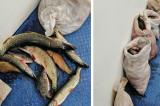 Braconaj piscicol: Peste 200 kg peşte, confiscate de polițiștii de frontieră