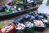 Braconaj piscicol în Delta Dunării: 279 de kilograme de pește confiscat și mult puiet redat mediului natural