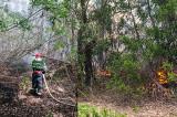Incendiu de vegetație uscată între Măcin și Smârdan