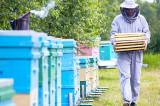 De Ziua mondială a albinelor, am modificat Legea Apiculturii și venim în sprijinul producătorilor și procesatorilor români