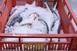 Au fost amendați pentru că vindeau pește (110 kg) și icre (20 kg) cu termen de valabilitate expirat