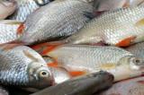 Braconaj piscicol la Sălcioara, pe Lacul Razim: 140 de kilograme de peşte confiscat și un motor de barcă