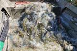 Comisariatul RBDD a desfăşurat o amplă acțiune de control în vederea combaterii braconajului piscicol în zona Razim- Sinoie, Insula Dranov