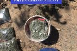 Tulcea: După mai multe percheziţii, poliţiştii tulceni au arestat trei traficanţi de droguri
