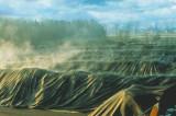 Se schimbă regulile: Legea privind gestionarea deşeurilor nepericuloase compostabile, o lege pentru oameni și pentru binele Planetei, a fost votată