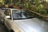 Autoturisme distruse în municipiul Tulcea de copacii căzuți din cauza furtunii
