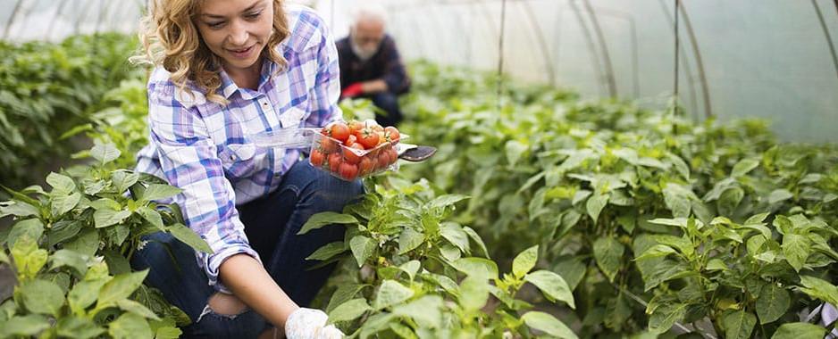 Lege pentru subvenții anuale de 10.000 și 20.000 de euro pentru fermierii care comercializează produse agricole primare